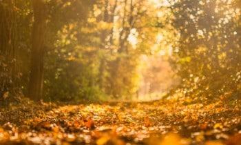 Autumnal woodland