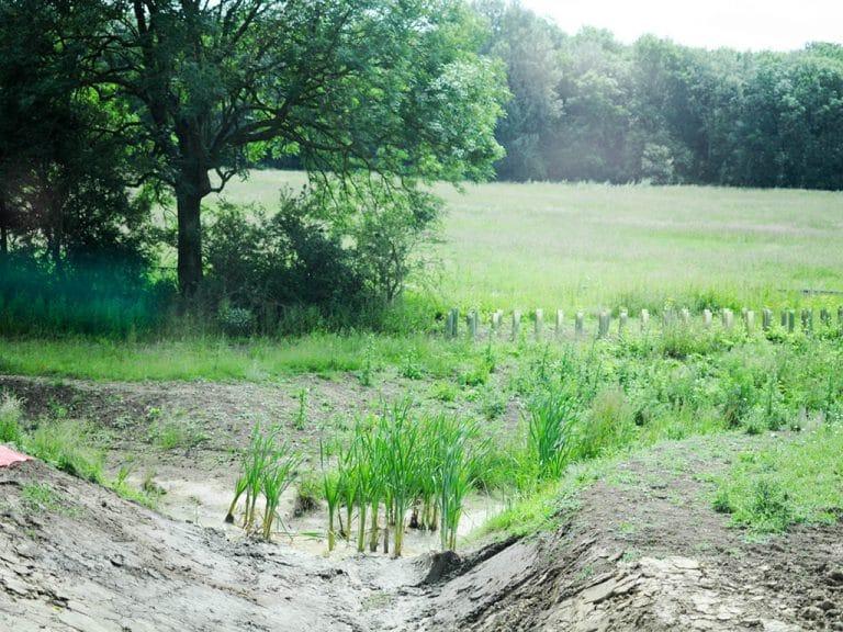 Swale Park - Graven Hill Environment